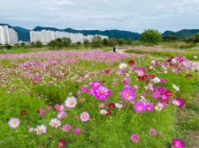 가을향기 가득 담은 '화순천변 꽃길 산책 코스' 인기